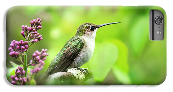 Spring Beauty Ruby Throat Hummingbird IPhone 6s Plus Case