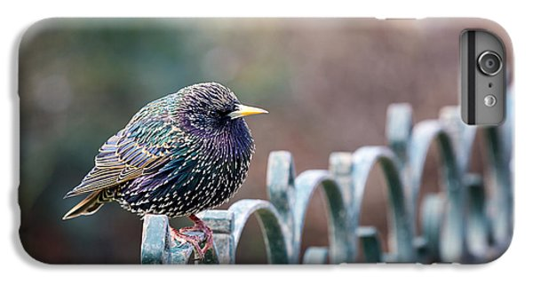 Starlings iPhone 6s Plus Case - Starling Juvenile Male by Jane Rix