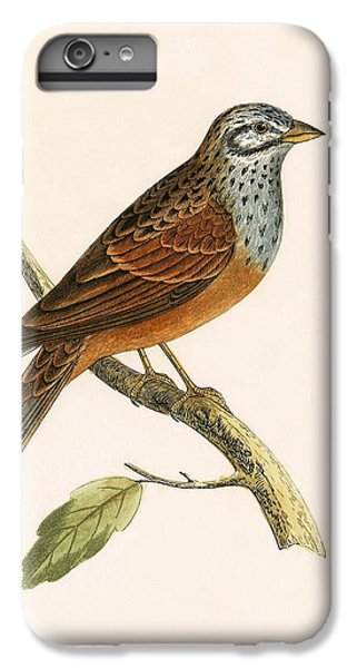 Striolated Bunting IPhone 6s Plus Case by English School
