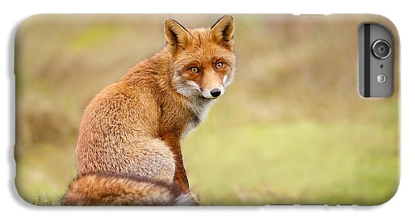That Look - Red Fox Male IPhone 6s Plus Case by Roeselien Raimond