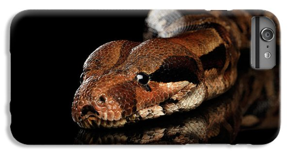 The Boa Constrictors, Isolated On Black Background IPhone 6s Plus Case by Sergey Taran
