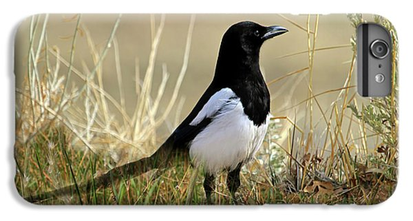 Magpies iPhone 6s Plus Case - The Elusive Magpie by Donna Kennedy