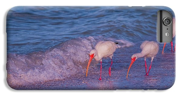 Ibis iPhone 6s Plus Case - The Locals by Betsy Knapp