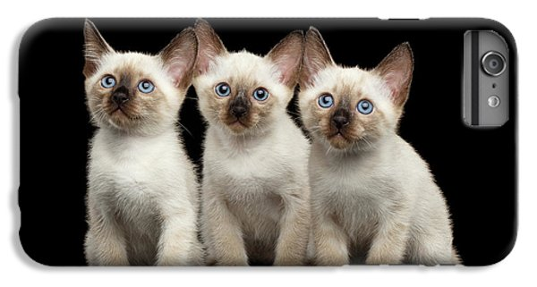 Cat iPhone 6s Plus Case - Three Kitty Of Breed Mekong Bobtail On Black Background by Sergey Taran