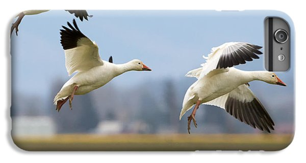 Three Landing IPhone 6s Plus Case by Mike Dawson