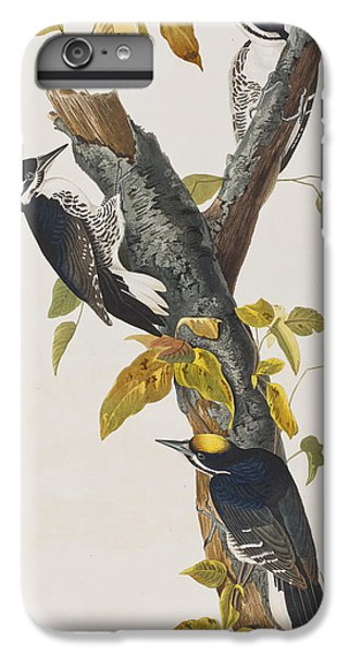 Three Toed Woodpecker IPhone 6s Plus Case by John James Audubon