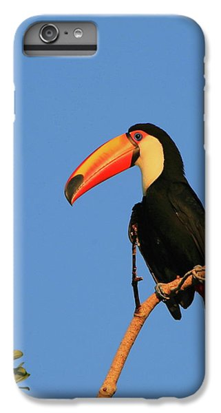 Toco Toucan IPhone 6s Plus Case by Bruce J Robinson