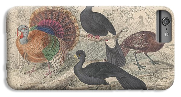 Turkeys IPhone 6s Plus Case by Rob Dreyer