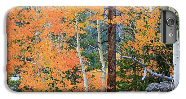 IPhone 6s Plus Case featuring the photograph Twisted Pine by David Chandler