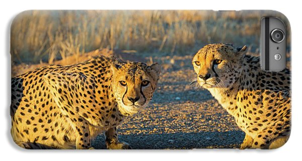 Two Cheetahs IPhone 6s Plus Case by Inge Johnsson