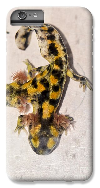 Two-headed Near Eastern Fire Salamande IPhone 6s Plus Case
