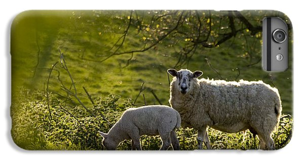 Sheep iPhone 6s Plus Case - Under The Setting Sun by Angel Ciesniarska