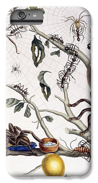 Various Arachnids From South America, 1726  IPhone 6s Plus Case