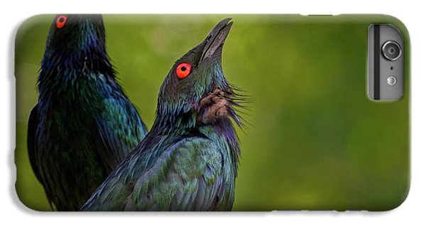 Starlings iPhone 6s Plus Case - What's Up There? by Jeremy Dufault