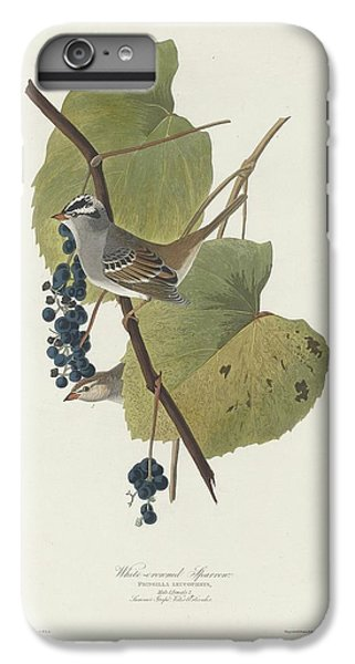 White-crowned Sparrow IPhone 6s Plus Case by Dreyer Wildlife Print Collections