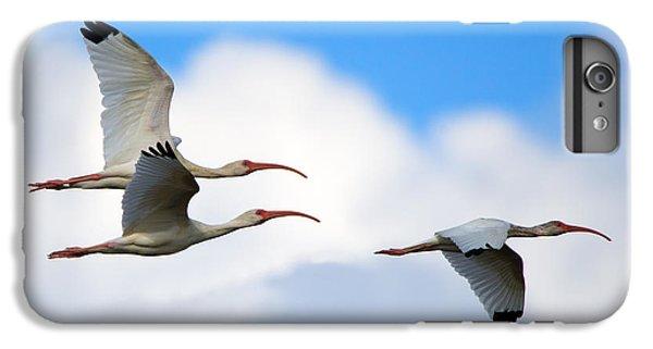 Ibis iPhone 6s Plus Case - White Ibis Flock by Mike Dawson