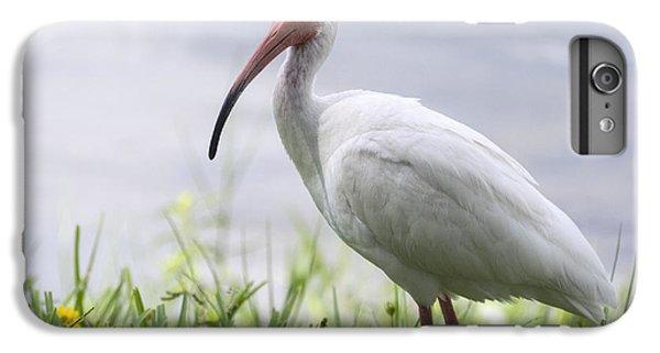 White Ibis  IPhone 6s Plus Case by Saija  Lehtonen