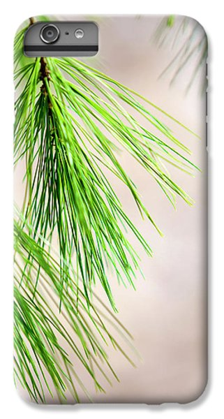White Pine Branch IPhone 6s Plus Case by Christina Rollo