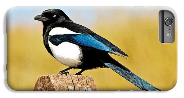 Magpies iPhone 6s Plus Case - Winking Magpie by Mitch Shindelbower