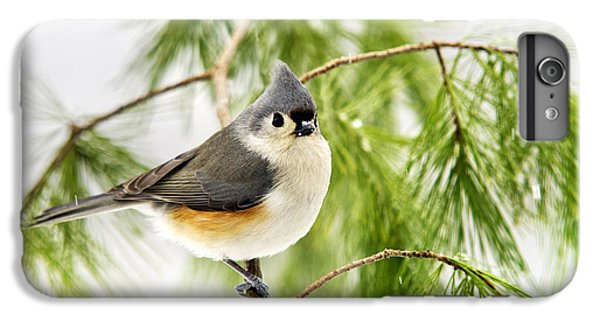Winter Pine Bird IPhone 6s Plus Case by Christina Rollo