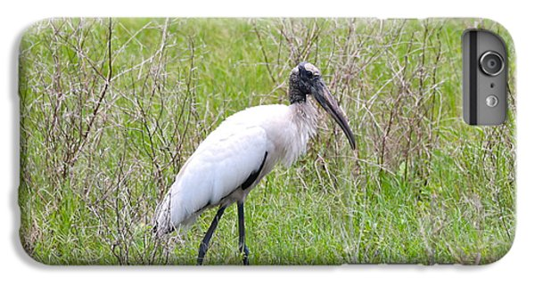 Wood Stork In The Marsh IPhone 6s Plus Case