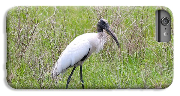 Wood Stork In The Marsh IPhone 6s Plus Case by Carol Groenen