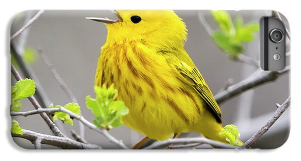 Yellow Warbler  IPhone 6s Plus Case