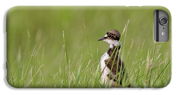 Killdeer iPhone 6s Plus Case - Young Killdeer In Grass by Mark Duffy