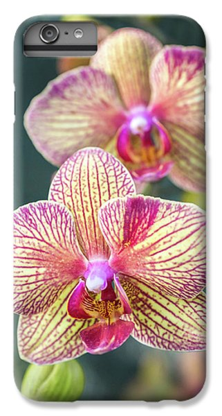 IPhone 6s Plus Case featuring the photograph You're So Vain by Bill Pevlor