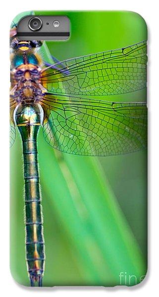Dragon iPhone 6s Plus Case - A Dragonfly Cordulia Aenea Warming Its by Corlaffra