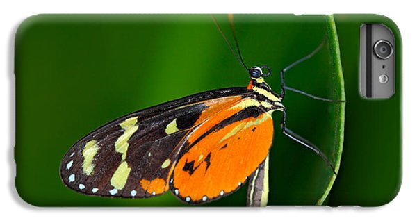 Flower Fairy iPhone 6s Plus Case - Butterfly Heliconius Hacale Zuleikas by Ondrej Prosicky