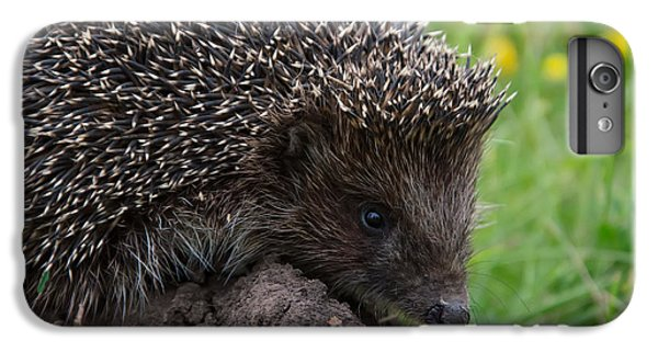 Spines iPhone 6s Plus Case - Cool Hedgehog On The Ground At Nature by Valery Kalantay
