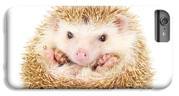 Spines iPhone 6s Plus Case - Four-toed Hedgehog, Atelerix by Kamonrat