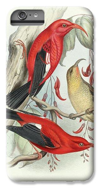 Scarlet iPhone 6s Plus Case - Iwi by Scott Barchard Wilson