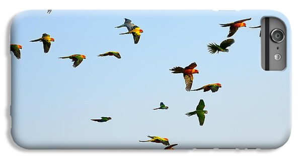Scarlet iPhone 6s Plus Case - Macaw And Sun Conure Flock Of Flying In by Jeep2499