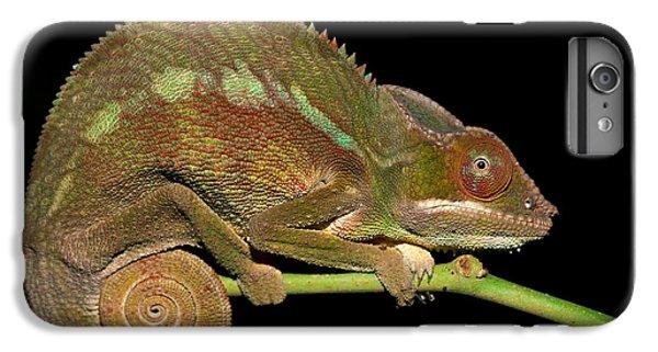 Dragon iPhone 6s Plus Case - Panther Chameleon Furcifer Pardalis In by Artush