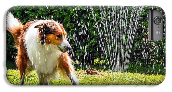 Hot iPhone 6s Plus Case - The Collie Is Avoiding The Sprinkler In by Dieterjaeschkephotography