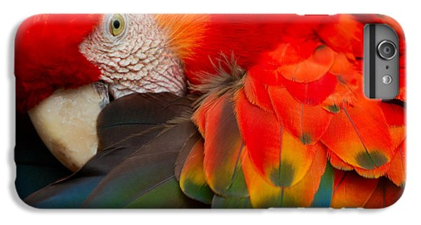 Scarlet iPhone 6s Plus Case - The Scarlet Macaw Is A Large Colorful by Ammit Jack