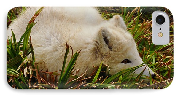 IPhone Case featuring the photograph  A White Fox by Mindy Bench