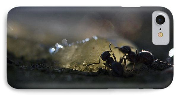 Ant Silhouette  IPhone Case by Odon Czintos