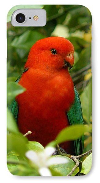 IPhone Case featuring the photograph  Aussie King Parrot by Margaret Stockdale