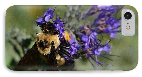 Bee Bombus On Spirea IPhone Case