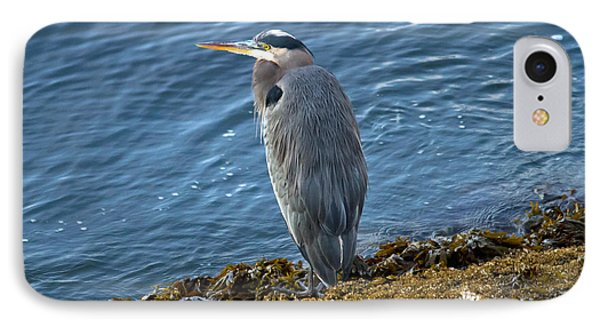 IPhone Case featuring the photograph  Blue Heron On A Rock by Eti Reid