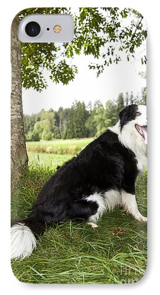 Border Collie In The Nature IPhone Case by Regina Koch