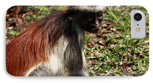 Colobus Monkey IPhone Case