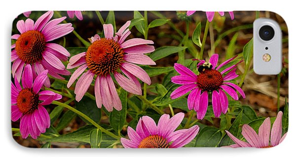 IPhone Case featuring the photograph  Coneflower Gang  by James C Thomas