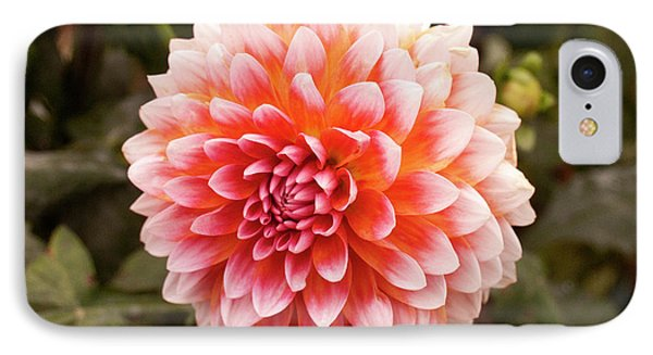 Dahlia 1 IPhone Case