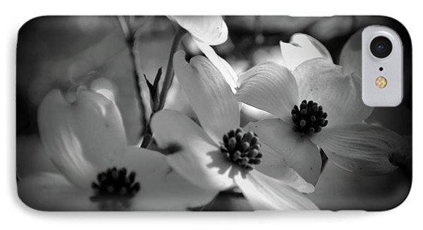 Dogwood Blossoms-bk-wh-v IPhone Case