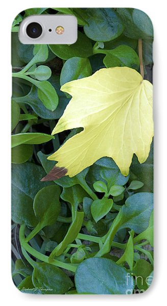 Fallen Yellow Leaf IPhone Case