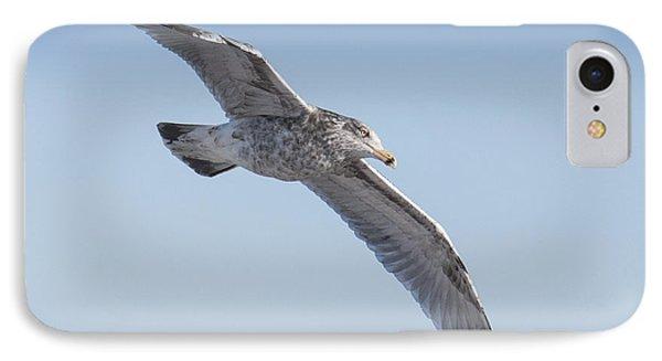 Gull Friend IPhone Case